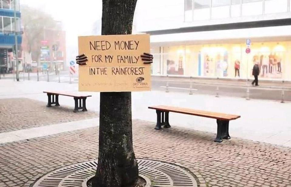 Rainforest need money